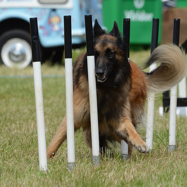 52e3d6404951a514f6da8c7dda793278143fdef85254774a752f7ed0904d 640 - Tips To Teach Any Dog New Tricks