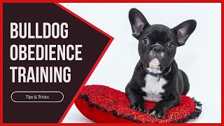 Bulldog Obedience Training Tips Tricks - Bulldog Obedience Training - Tips & Tricks