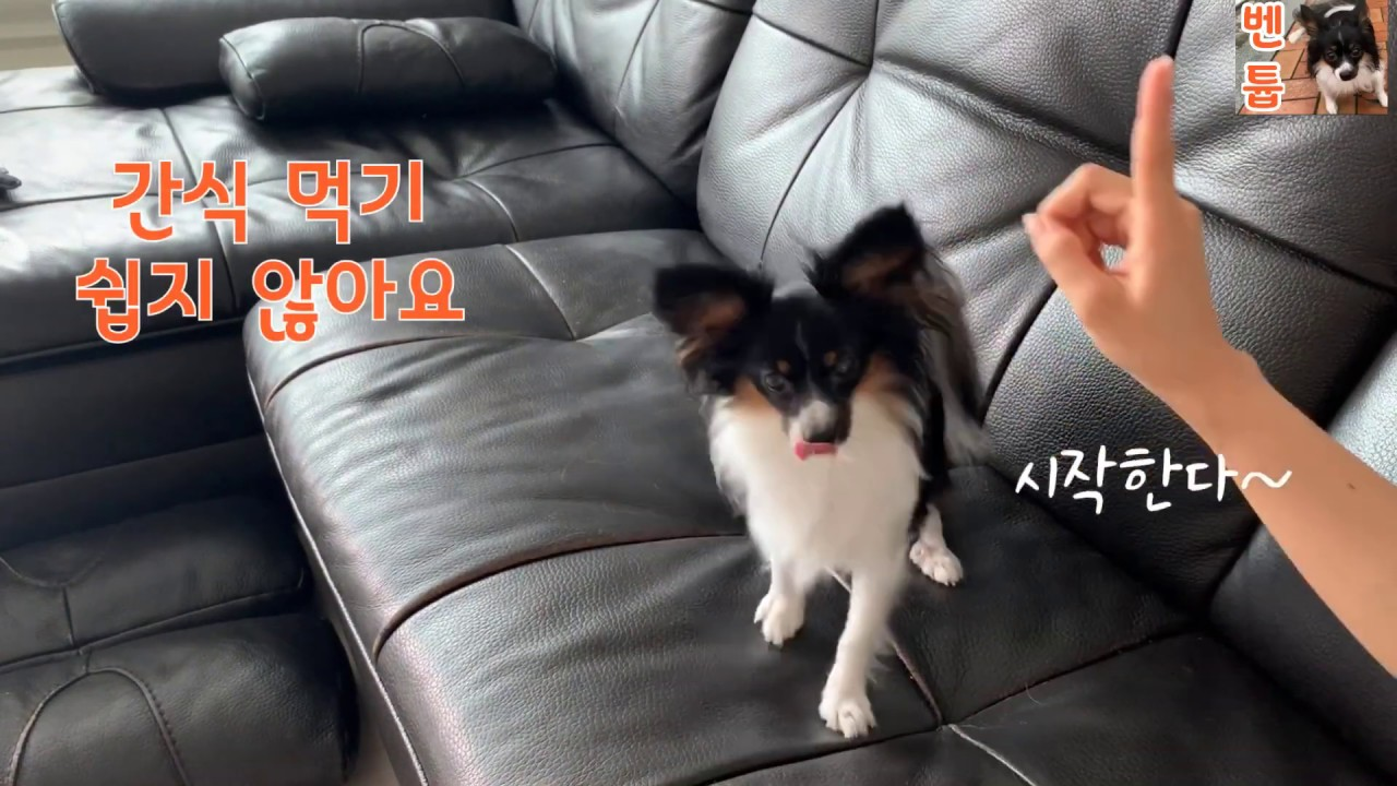 Dog training  - 간식훈련 Dog training ~