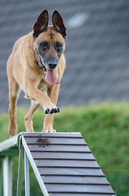 51e4dd414d53b108f5d08460962d317f153fc3e45657774b762a79d296 640 - Great Tips That Can Help You Train Your Dog