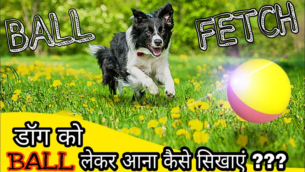 BALL Fetch Command Dog Training tips and tricks 2019 - डॉग को  BALL लेकर आना कैसे सिखाएं | Fetch Command | Dog Training tips and tricks 2019