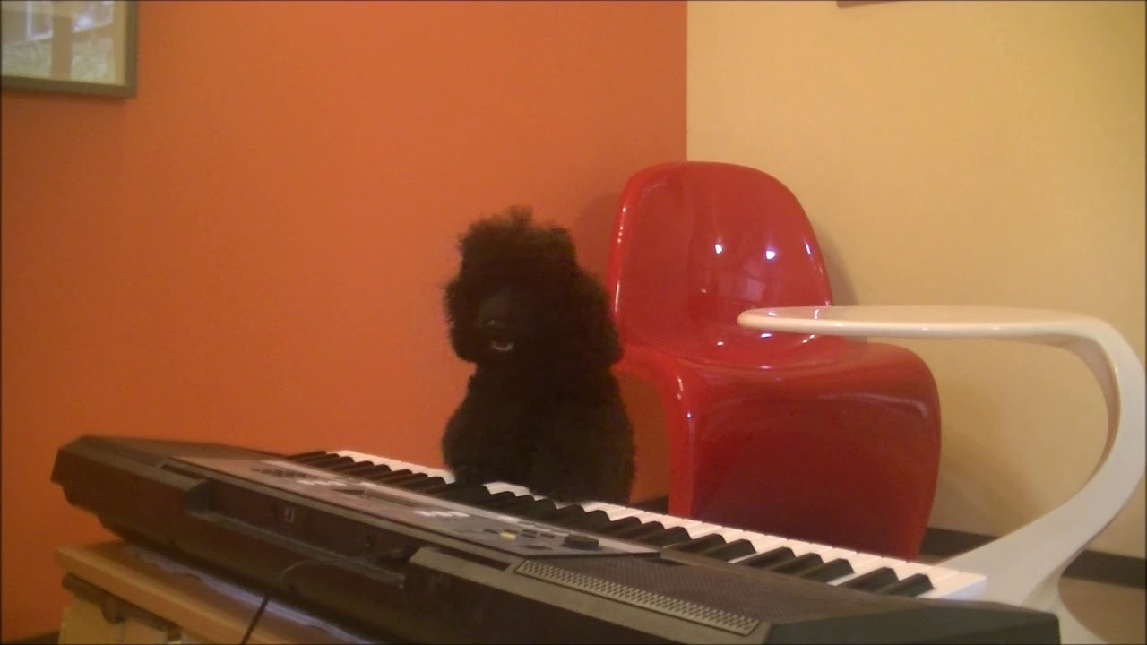 Dog Training Movie720 - 犬の訓練動画です♪Dog Training Movie720♪