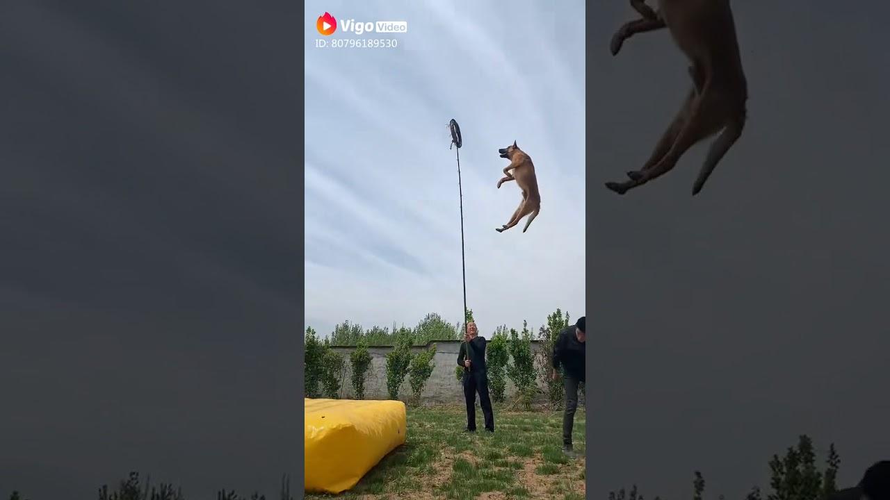 God level training of dogs OMG High level dog training Arcadia - God level training of dogs 😱😱 OMG!! High level dog training #Arcadia
