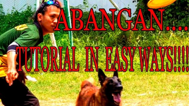 Basic Tutorial Dog Training in Easy WaysWATCH OUT - Basic Tutorial Dog Training in Easy Ways(WATCH OUT)