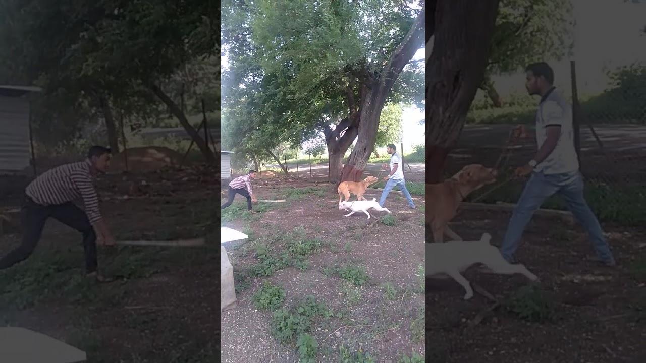 Dog training session 3 - Dog training session 3