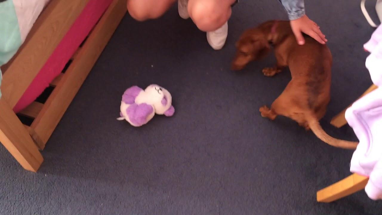 Lily Mae Howard dog training - Lily Mae Howard dog training