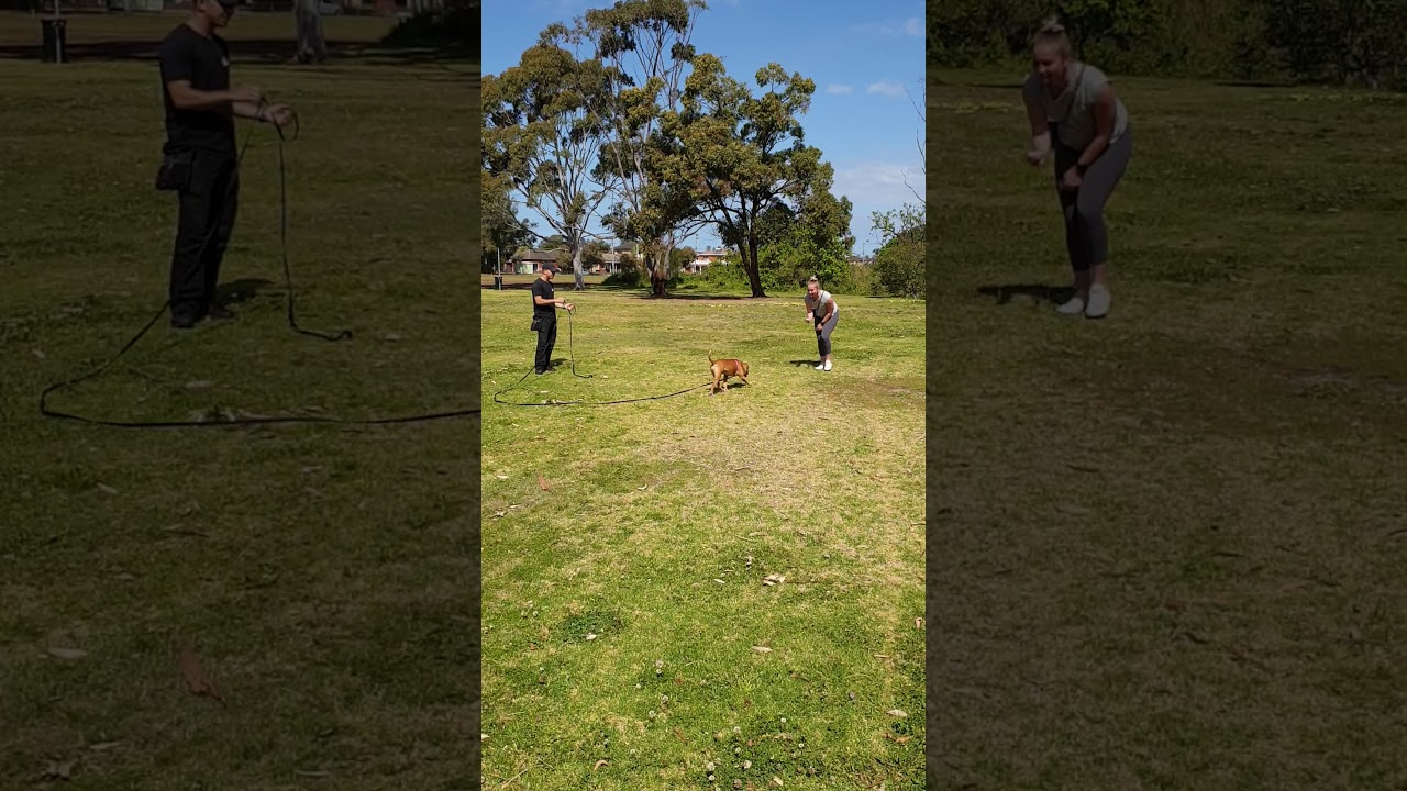 THE MOST IMPORTANT DOG TRAINING COMMAND - THE MOST IMPORTANT DOG TRAINING COMMAND