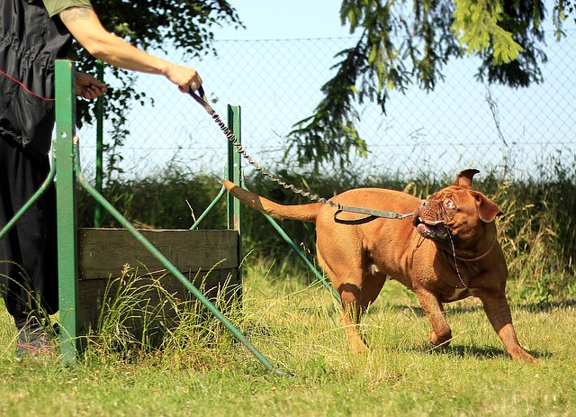 54e1d3454d57b108f5d08460962d317f153fc3e45656704d7d2b7ed49e 640 - Train Your Dog In No Time With This Amazing Advice