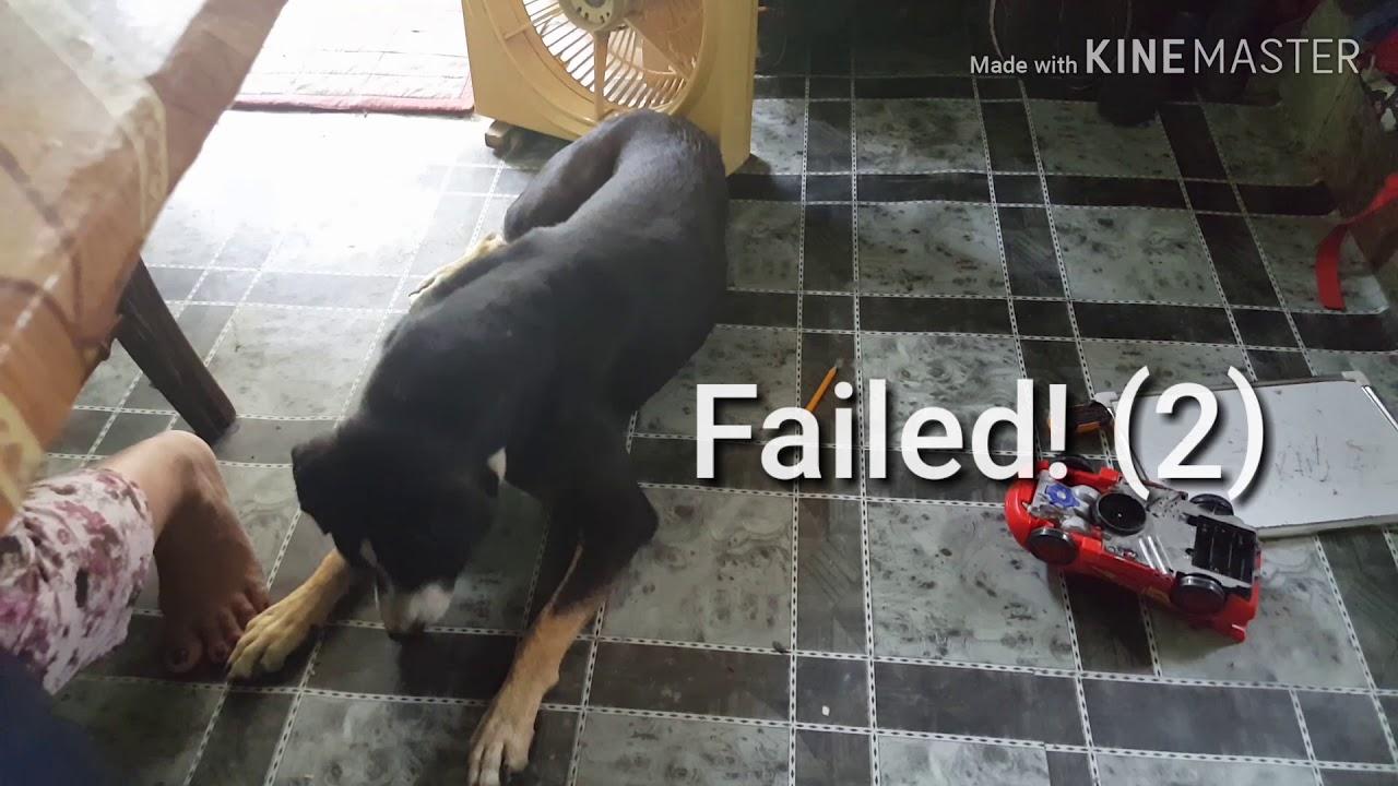 Dog Training Food Catching - Dog Training - (Food Catching)