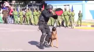 Indian army dog training video army extreme training and Disciplined Army dog training 360p - Indian army dog training video| army extreme training and Disciplined | Army dog training 🔥🔥🔥360p