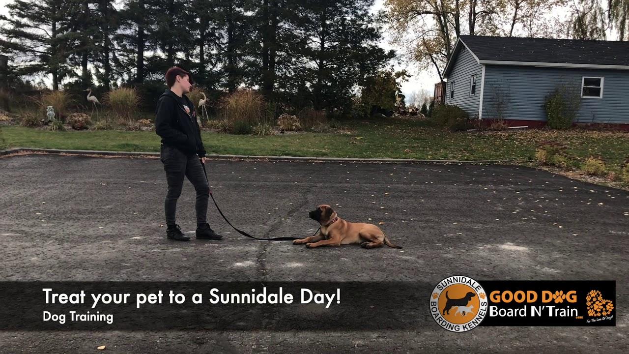 Kundra Results driven dog training at Sunnidale Boarding Kennels - Kundra - Results driven dog training at Sunnidale Boarding Kennels