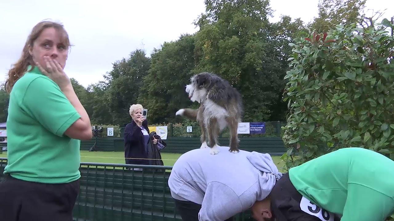 The Essex Dog Training Centre World record challenge 2019 - The Essex Dog Training Centre World record challenge 2019