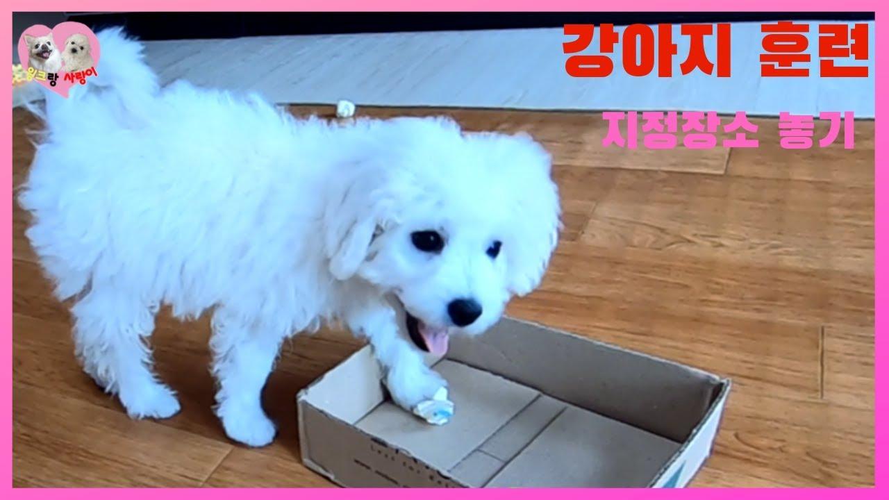 dog trainingwinklove - [강아지훈련]새끼강아지 지정장소 물건놓기[쓰레기버리기]dog training(wink&love)