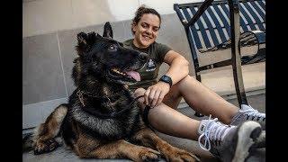 military dog training videos - military dog training videos