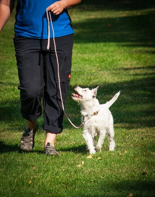 55e8d14a4d5aac14f6da8c7dda793278143fdef85254764d7d297ed19445 640 1 - Tricks On How To Train Your Dog Correctly
