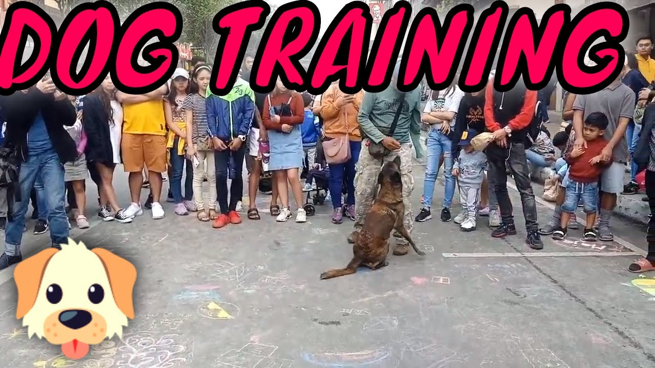 Dog training in the Philippines - Dog training in the Philippines
