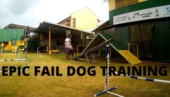 Epic Fail Dog training process - Basic Tutorial Dog Training in Easy Ways(WATCH OUT)