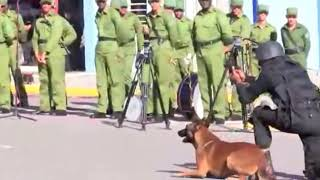 Indian army dog training  - इंडियन आर्मी डाॅग ट्रेनिंग  (Indian army dog training )