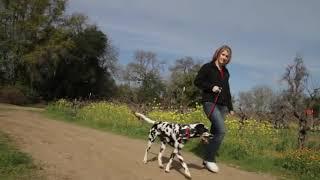 ezydog checkmate dog training collar - ezydog checkmate dog training collar