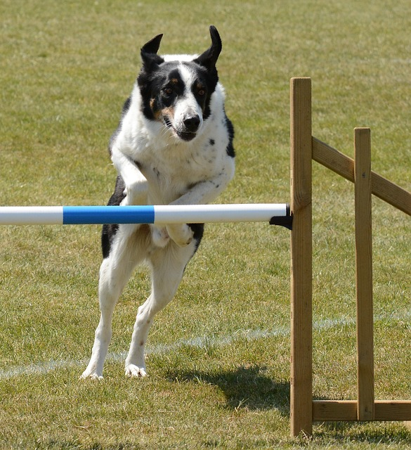 57e1d6434c5aa914f6da8c7dda793278143fdef85254764c7d2b7cd4954a 640 1 - Tips On How To Train Your Dog Successfully