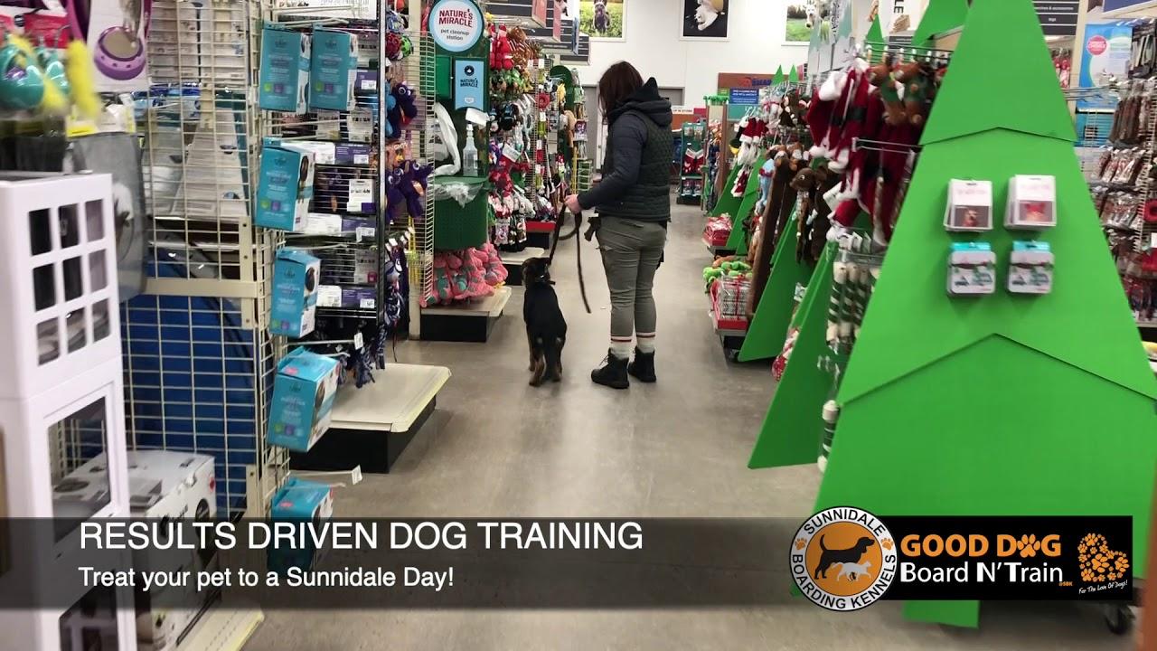 Sky dog training at Sunnidale Boarding Kennels - Sky dog training at Sunnidale Boarding Kennels