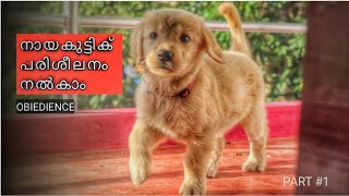 1 how to start puppy dog training basics kerala  - #1 how to start | puppy | dog training |  basics | kerala | നായയെ പരിശീലിപ്പിക്കാം