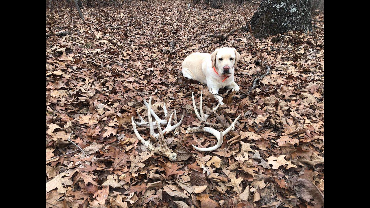 Early Season Shed Dog Training - Early Season Shed Dog Training