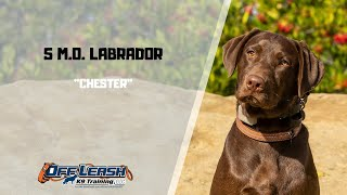 LABRADOR DOG TRAINING - LABRADOR / DOG TRAINING