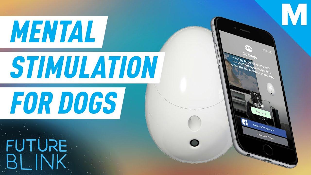 AI Dog Training Game App Future Blink - AI Dog Training Game App | Future Blink