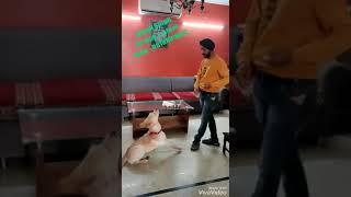 Labro Dog Training - Labro Dog Training