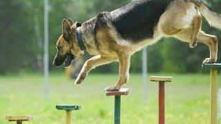 dog training dance - dog training dance