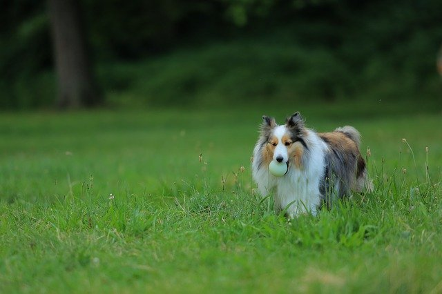 helpful tips and tricks to train any dog - Helpful Tips And Tricks To Train Any Dog