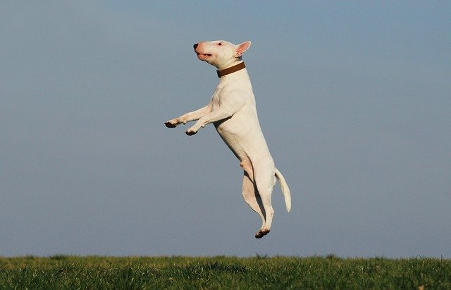 training a dog should start on day one - Training A Dog Should Start On Day One