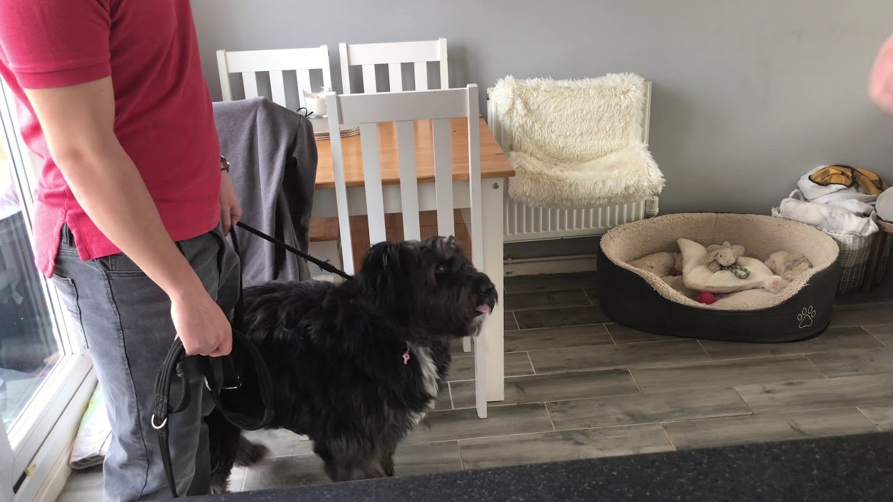 Dog Reacts To Slight Movement Try This Southend Dog Training - Dog Reacts To Slight Movement | Try This ! | Southend Dog Training