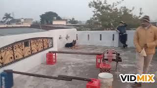 Dog training in Hindi in simple way - Dog training in Hindi in simple way