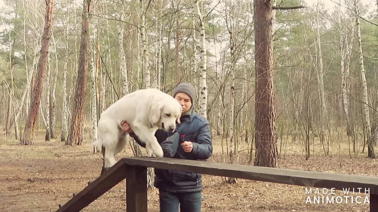 K DOG training moments early MAR2020 - K-DOG training moments early MAR2020