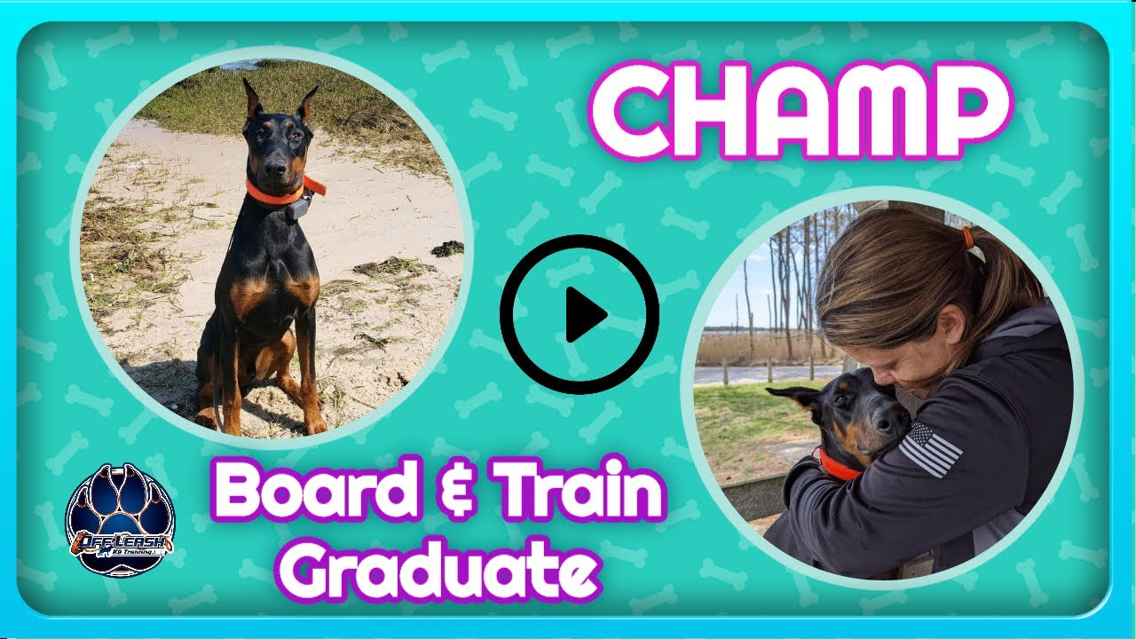 7mo Doberman Champ I Puppy Obedience I Best Dog Trainers in Delaware - 7mo Doberman (Champ) I Puppy Obedience I Best Dog Trainers in Delaware