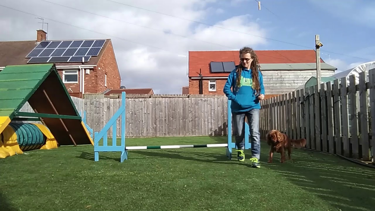Lockdown Isolation 1 Jump Dog Training Ep4 Ketschker - Lockdown Isolation 1 Jump Dog Training   Ep4   Ketschker