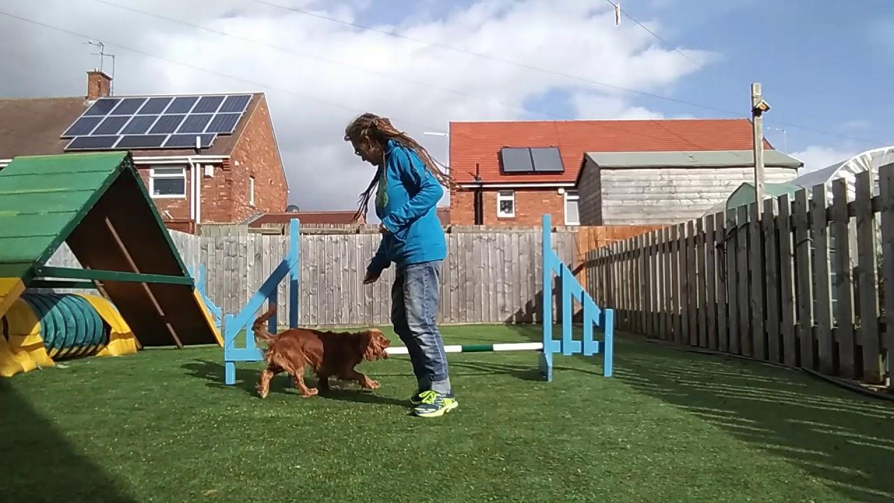 Lockdown Isolation 1 Jump Dog Training Ep6 The German - Lockdown Isolation 1 Jump Dog Training   Ep6   The German