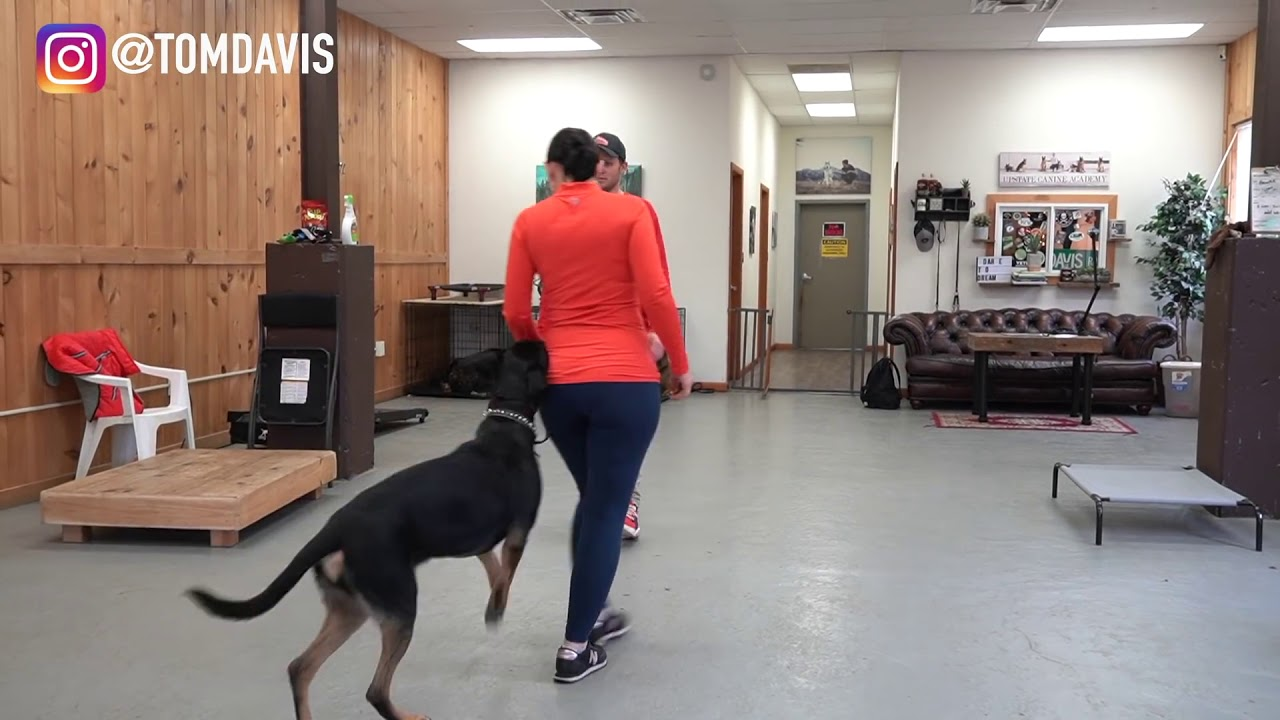 Watch this dog training video - Watch this dog training video