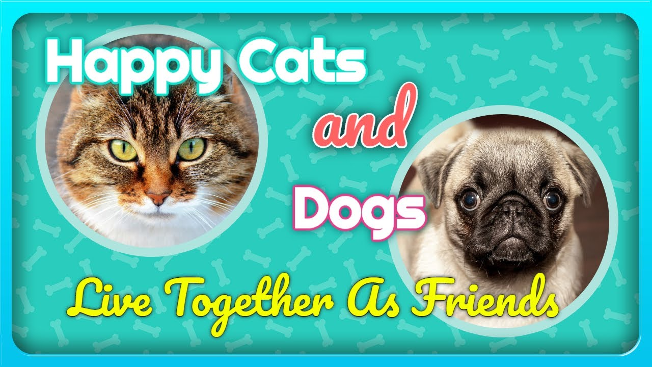 maxresdefault - Happy Cats And Dogs Live Together As Friends
