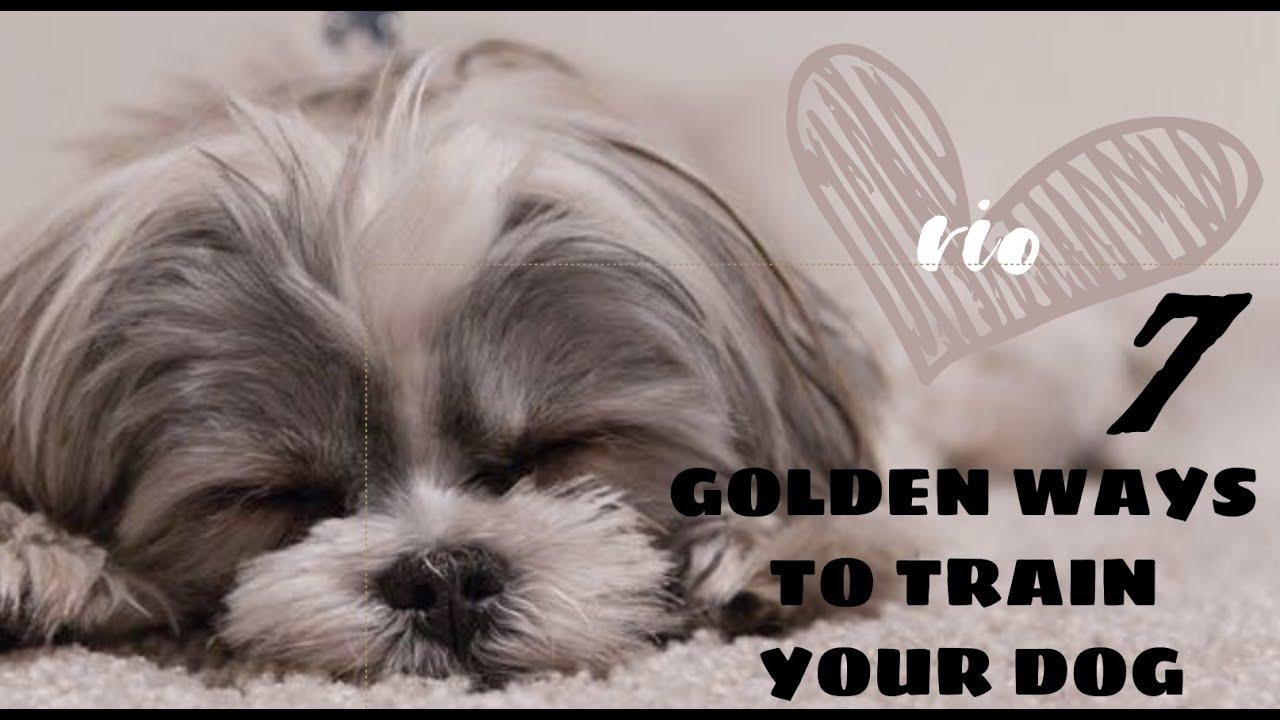 7 Golden Ways Dog Training Rio - 7 Golden Ways   Dog Training   Rio