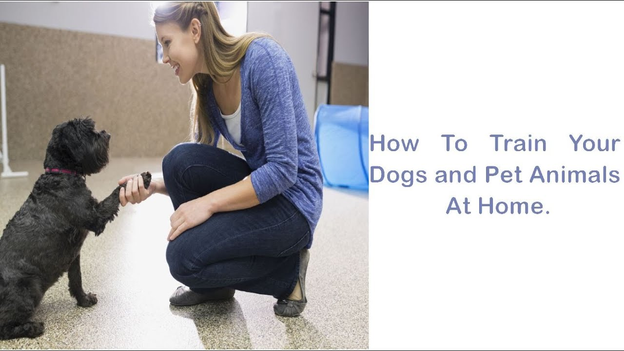 Dogs Training About Eating - Dogs Training About Eating