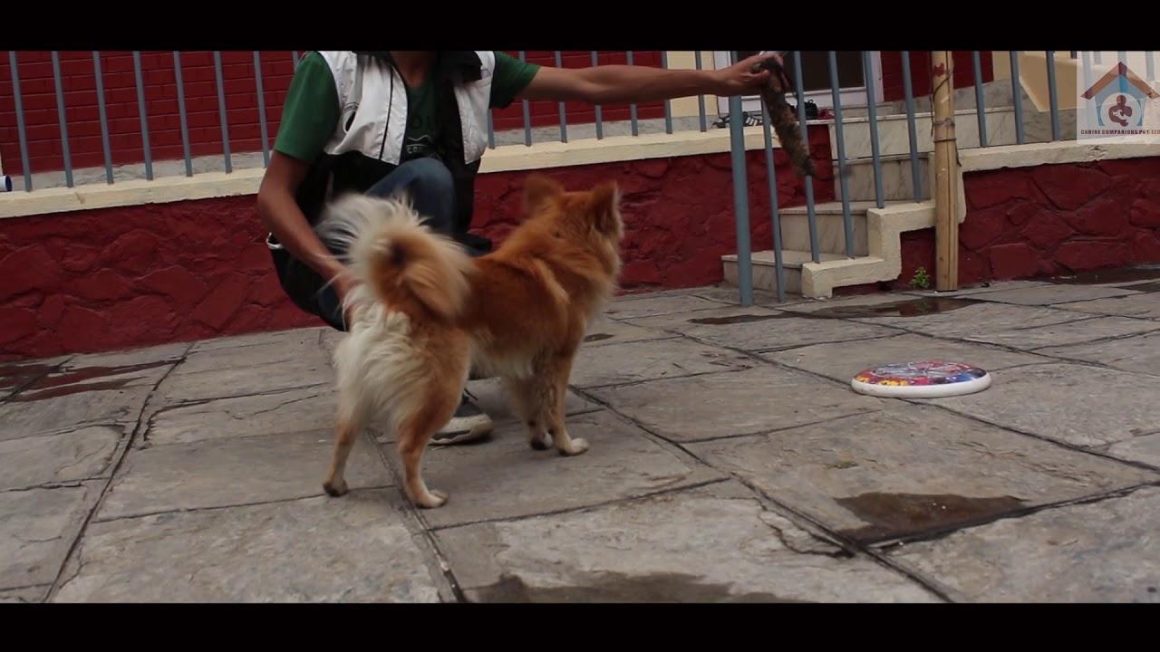 Happy Dog Training - Happy Dog Training