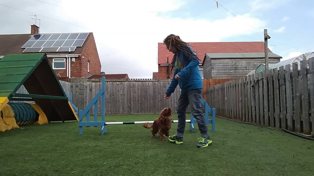 Lockdown Isolation 1 Jump Dog Training Ep7 Go Round Same Leg Collection Flick - Lockdown Isolation 1 Jump Dog Training   Ep7   Go Round Same Leg Collection Flick