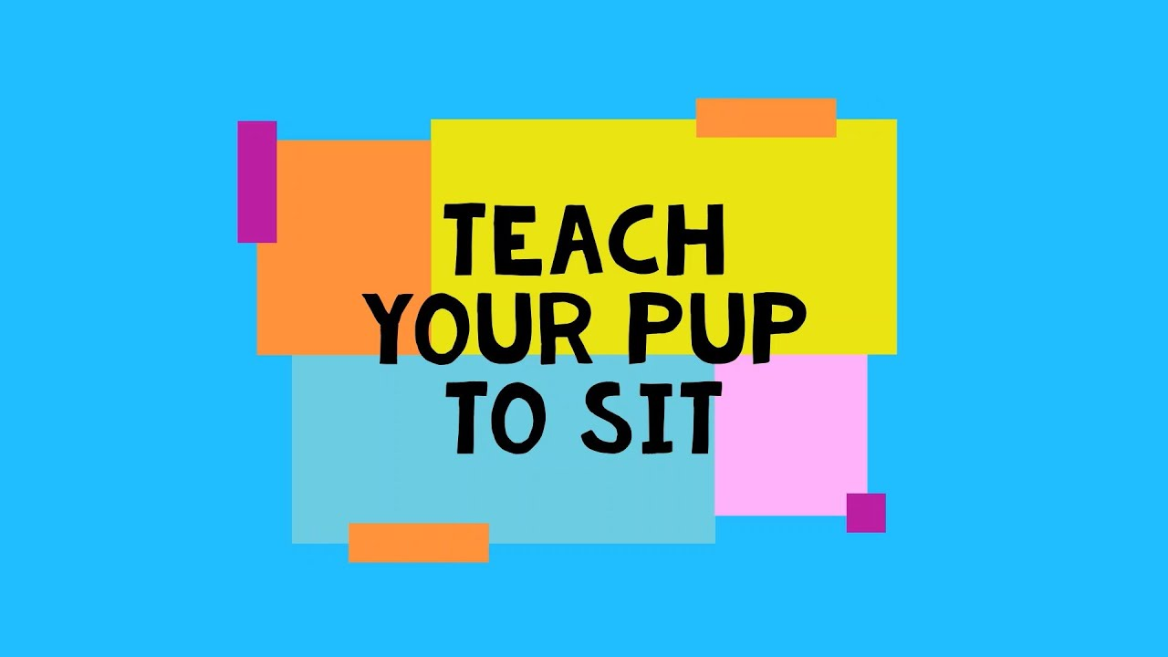 Dog Training Flintshire Teach your Pup to Sit - Dog Training Flintshire -Teach your Pup to Sit