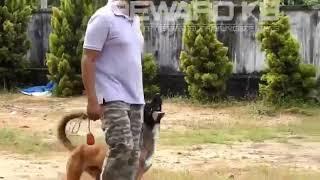 Reward k9 Dog training - Reward k9 Dog training