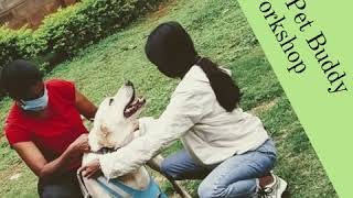 Dog Training Workshop for Pet lovers in Bangalore - Dog Training Workshop for Pet lovers in Bangalore