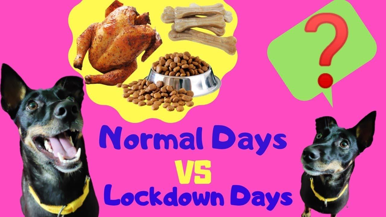Lockdown Days Indian Pariah Dog Street Dog Training Desi Dog Stray Dog - Lockdown Days | Indian Pariah Dog | Street Dog Training | দেশি কুকুর ট্রেনিং | Desi Dog | Stray Dog|