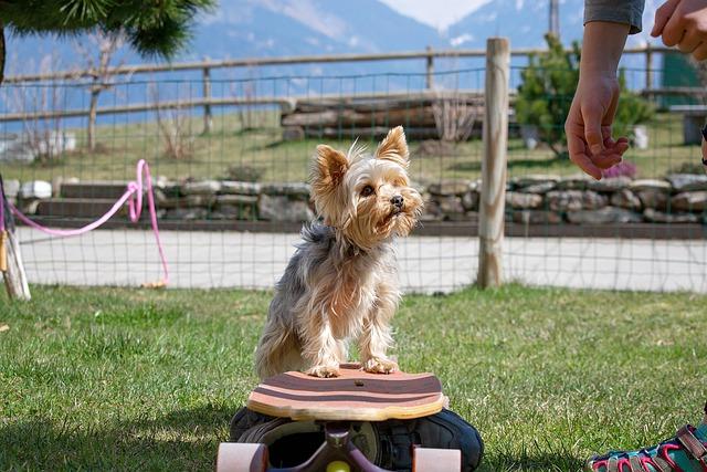 dog training can be fun and rewarding - Dog Training Can Be Fun And Rewarding